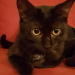 profil picture Barbaraeva Z