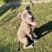 profil picture Amphone A